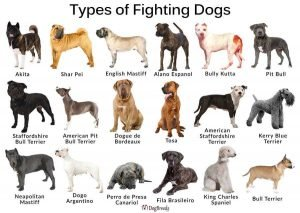 Types of Fighting Dogs