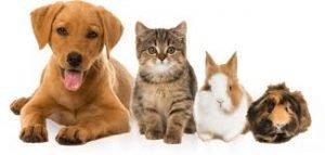 VIP Pet Care 3