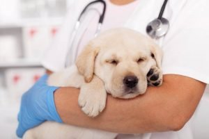 VIP Pet Care 6