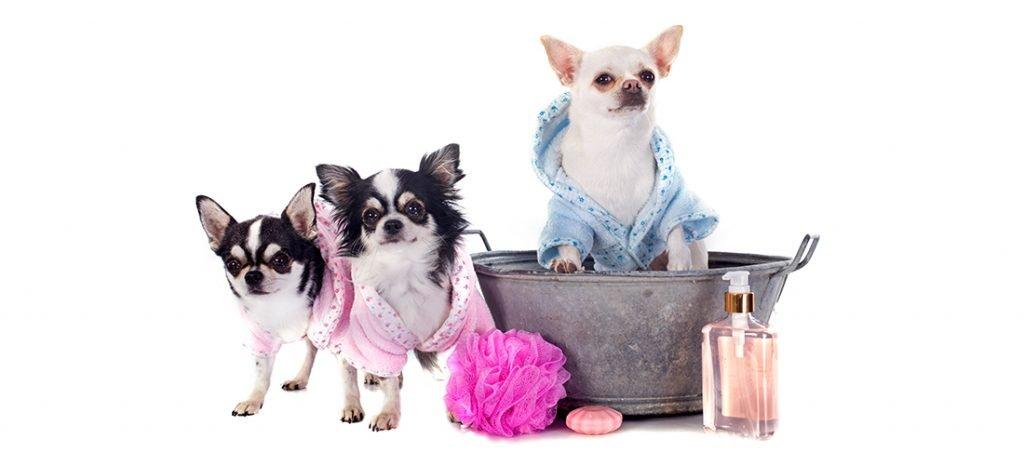 VIP Pet Care 8