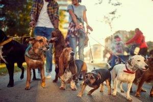 Walk Your Furry Friend