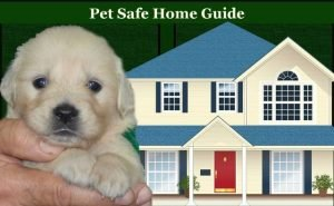 Your Home Pet-Safe