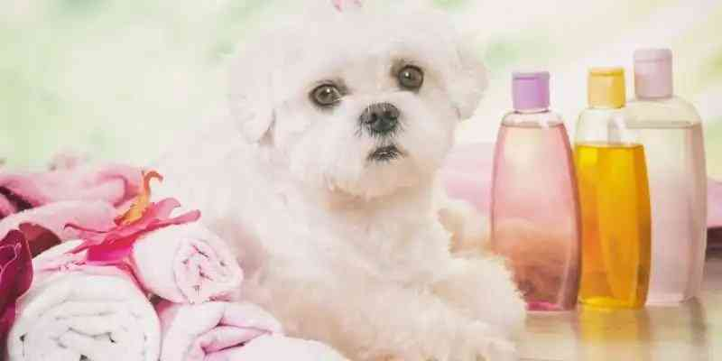 flea shampoo for dogs