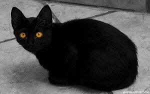 black cat names 11