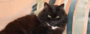 black cat names 13