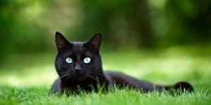 black cat names 14