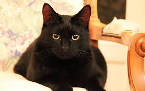 black cat names 4