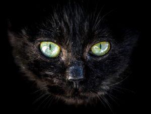 black cat names 624x473