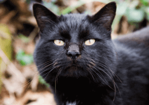 black cat names 7