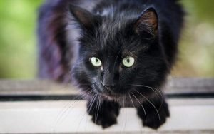 black cat names 2