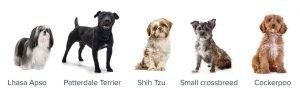 cheapest dog breeds