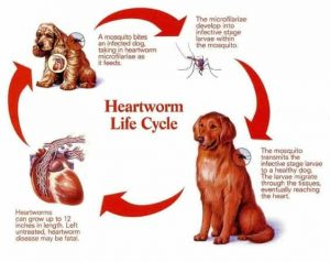 heartworm prevention for dogs 3