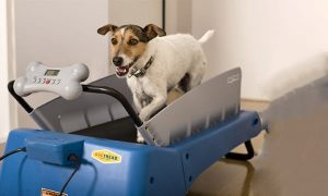 Best-Dog-Treadmills