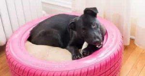 Best Indestructible Dog Bed 1