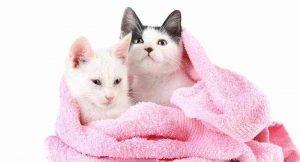 Best Kitten Shampoos