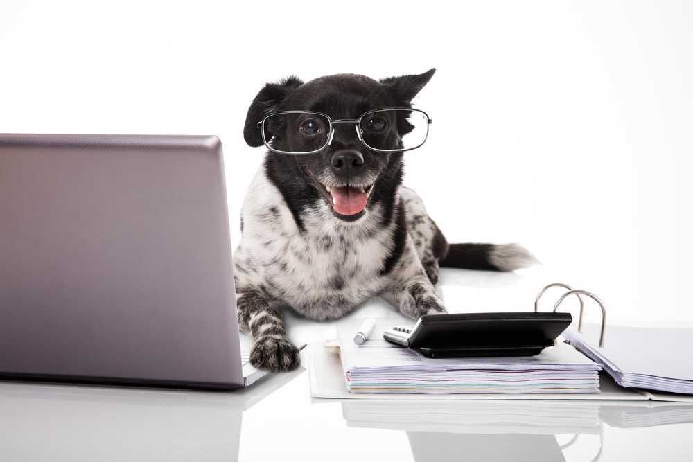 PET OWNERSHIP COSTS GUIDELINES