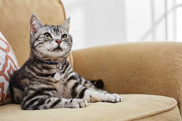 CAT SITTER 2