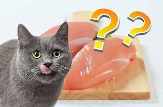 Can Cats Eat Raw Chicken 3