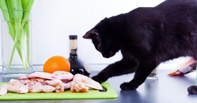 Can Cats Eat Raw Chicken 6
