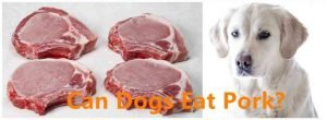 Can Dogs Eat Pork 3