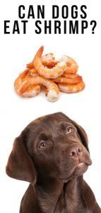 Can Dogs Eat Shrimp 2