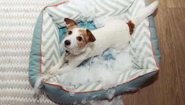 Chew Resistant Dog Beds