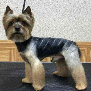 Dark Parallels Yorkie Haircuts