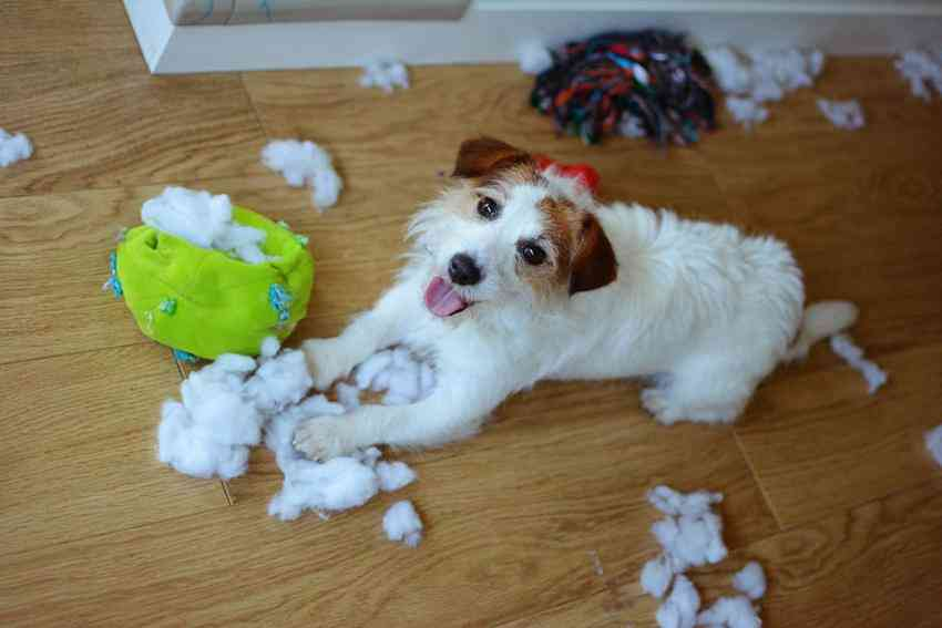 Disciplining A Dog Positively