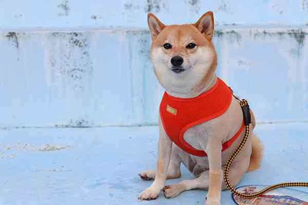 Dog Safety Tips 1