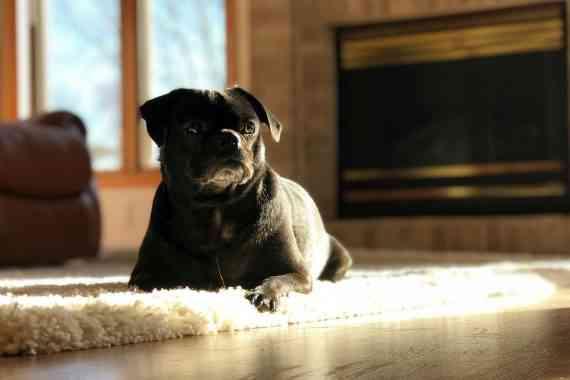 Dog Safety Tips 3