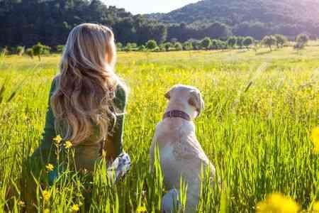 Dog Safety Tips 4