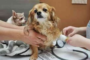 Emergency Pet Hospital2