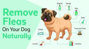 GET RID OF FLEAS NATURALLY