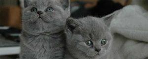 GREY CAT NAMES 2