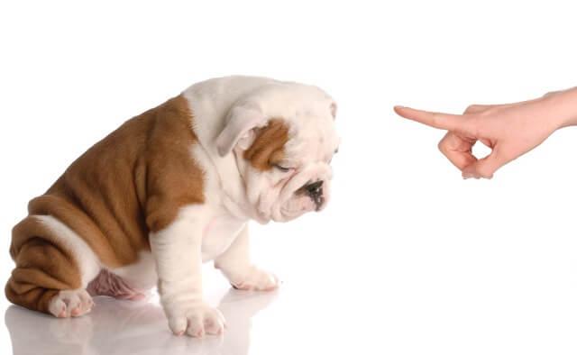 How To Discipline A Dog 1