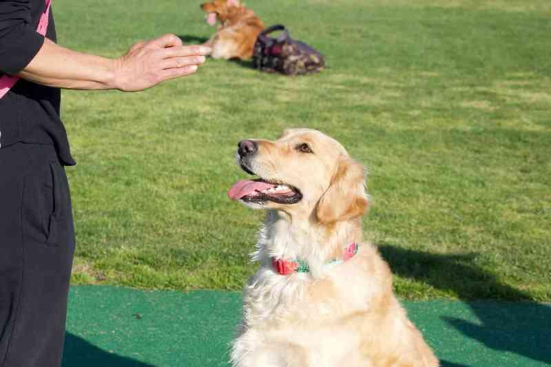 How to Discipline a Dog 2