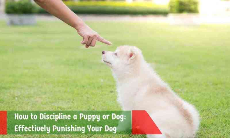 How to Discipline a Dog 3