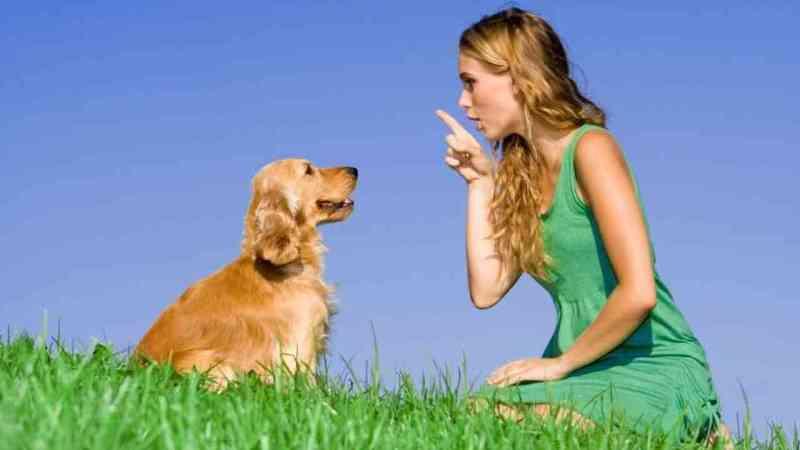 How to Discipline a Dog 4