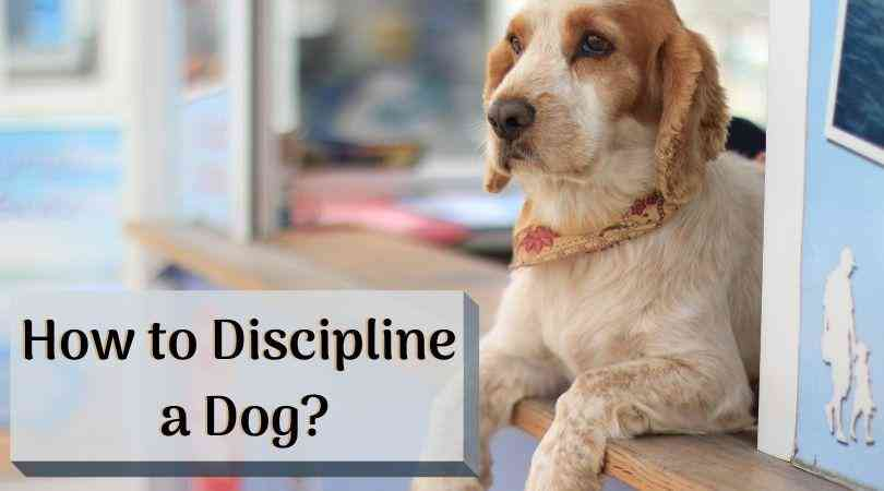 How to Discipline a Dog 1
