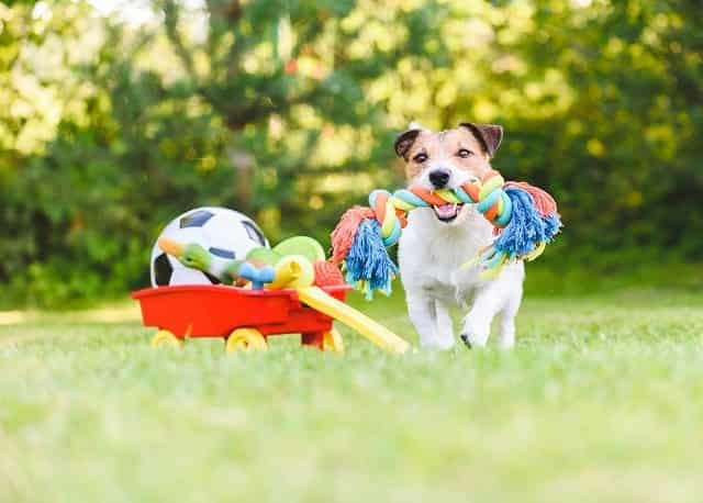 Interactive Dog Toys 1