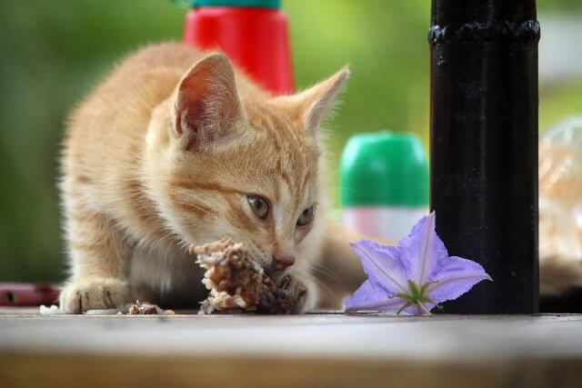 Is Chicken Safe For Cats 2