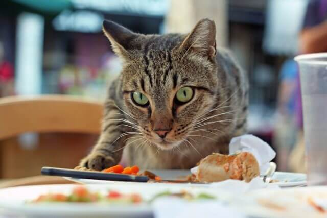 Is Chicken Safe For Cats 4