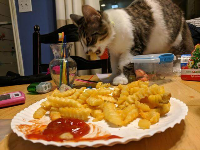 Is Chicken Safe For Cats 5