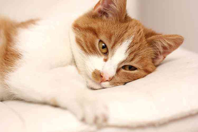best cat dewormers 1