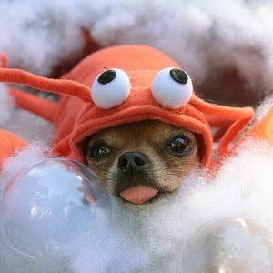 can dogs eat seafood 1