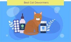 cat dewormers