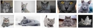 grey cat names