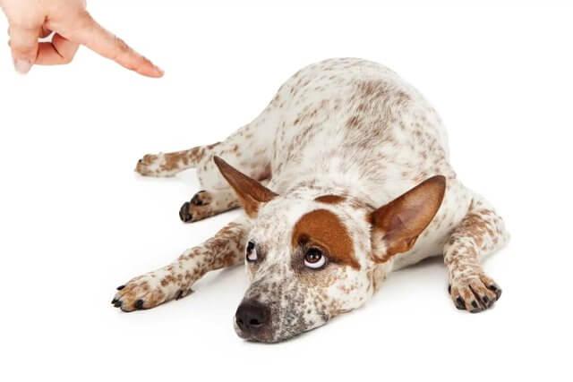 how to discipline a dog 5
