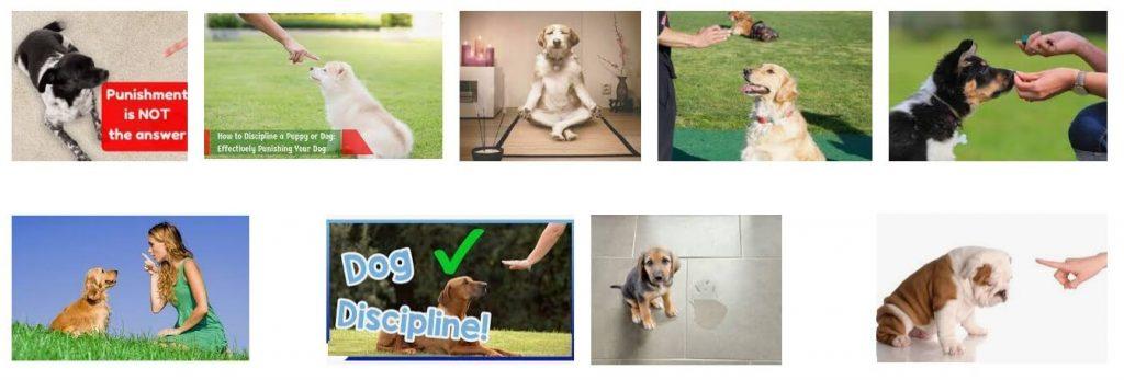 how to discipline a dog
