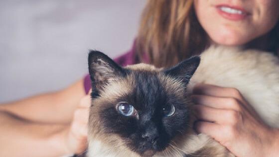 professional cat sitter 2